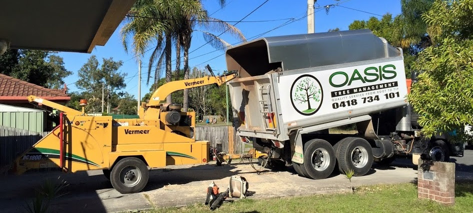 Why we are not Brisbane tree loppers