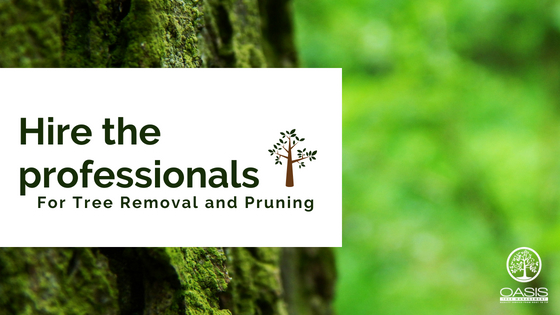 Hire the Professionals for Tree removal!