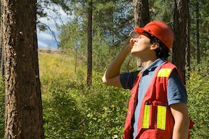 Signs your tree is unhealthy | Oasis Tree Management Brisbane