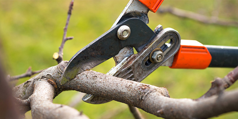 To prune or not to prune