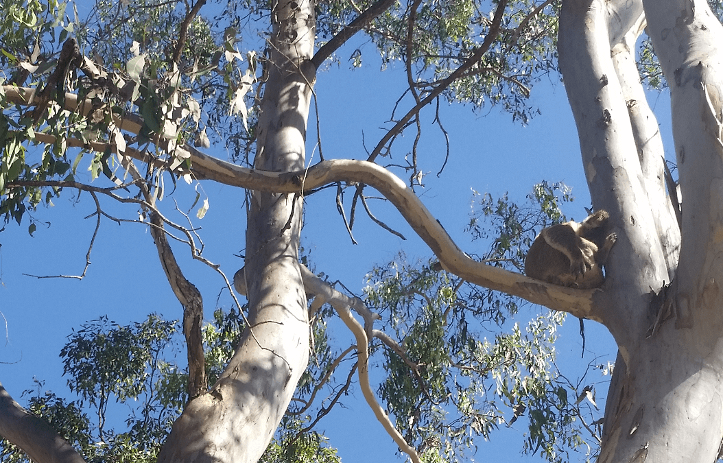 Protected Vegetation Brisbane: Removing protected trees from your property