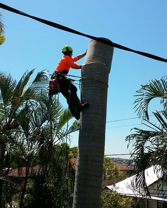 Why Choose an Arborist for Brisbane Southside tree removal?