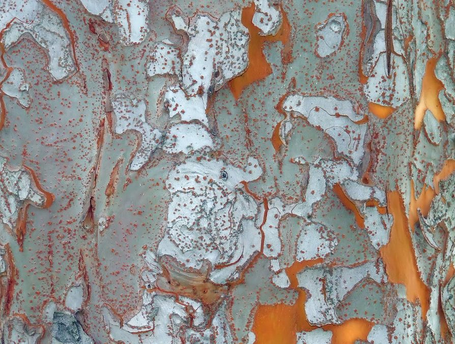 Tree Bark. As unique as we are.
