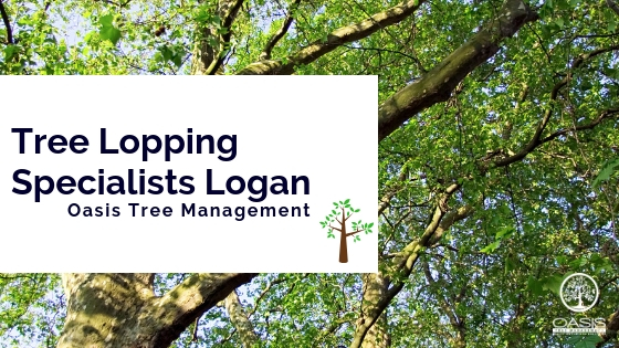Tree Lopping Specialists Logan