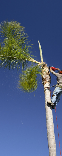 palm tree removal brisbane