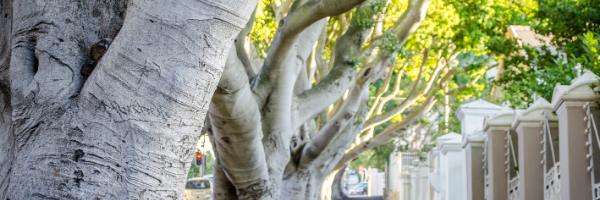 Tree Removal, Brisbane Southside, Learn About The Cost And How To Get It Done Properly